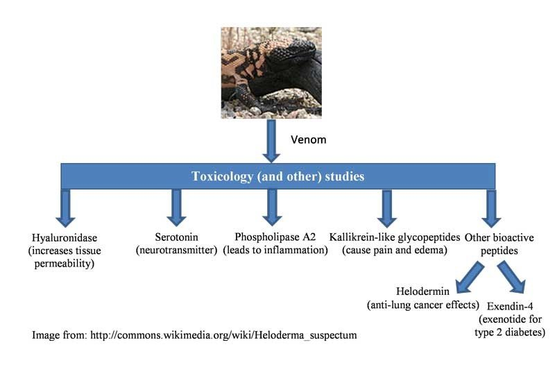 Gila Monster Toxicology